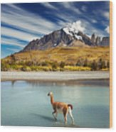 Guanaco Crossing The River In Torres Wood Print