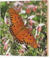 Gulf Fritillary Aka Passion Butterfly Wood Print