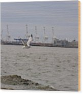 Gull In Flight On New Jersey Bay Wood Print