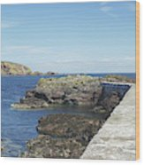 harbour wall and cliffs at St. Abbs, Berwickshire Wood Print
