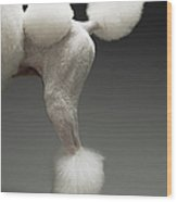Haunches Of Poodle, On Grey Background Wood Print