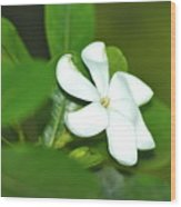 Hawaiian Gardenia Wood Print