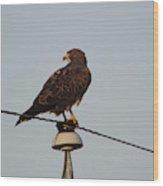 Hawk On An Old Power Line Wood Print