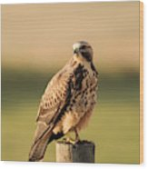 Hawk On The Edge Of A Field Wood Print