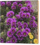 Hedgehog Cactus And Yellow Daisies Wood Print