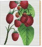 Hepstine Raspberries Hanging From A Branch Wood Print