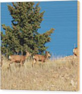 Herd Of Colorado Deer Wood Print