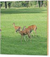 Herd Of Deer Wood Print