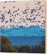 Herd Of Snow Geese In Flight, Soccoro Wood Print