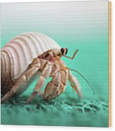 Hermit Crab Running Wood Print