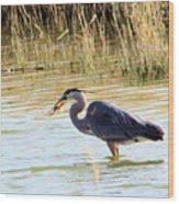 Heron Capturing A Fish Wood Print