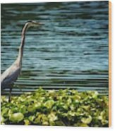 Heron In The Lily Pads Wood Print