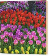 Hidden Garden Of Beautiful Tulips Wood Print
