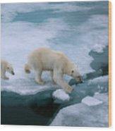 High Angle Of Mother Polar Bear And Cub Wood Print