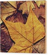 High Resolution Dry Maple Leaf On Wood Print