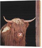 Highland Cattle In Barn Door Wood Print