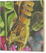 Honey Bee On Mexican Heather Wood Print
