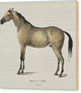 Horse  Equus Ferus Caballus  Illustrated By Charles Dessalines D' Orbigny  1806-1876  Wood Print