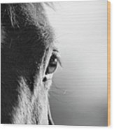 Horse In Black And White Wood Print
