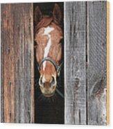 Horse Peeking Out Of The Barn Door Wood Print