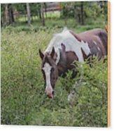 Horse Print 578 Wood Print