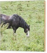 Horse Print 828 Wood Print