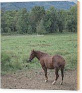 Horse Print 900 Wood Print