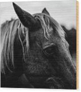 Horse Up-close Wood Print