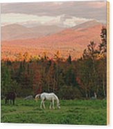 Horses Grazing During The New England Wood Print