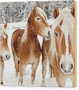 Horses In White Winter Landscape Wood Print