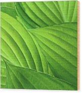 Hosta Leaves Wood Print