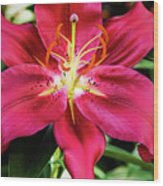 Hot Pink Day Lily Wood Print