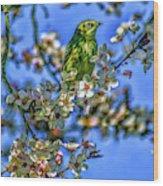 House Finch Wood Print