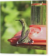 Hummingbird 106 Wood Print