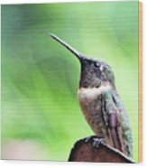 Hummingbird 90 Wood Print
