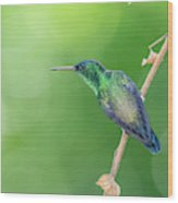 Hummingbird Abyss Wood Print