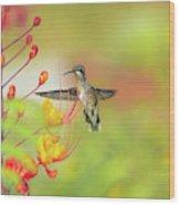 Hummingbird And Pride Of Barbados  Wood Print