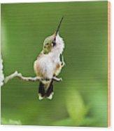 Hummingbird Flexibility Wood Print