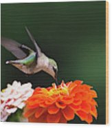 Hummingbird In Flight With Orange Zinnia Flower Wood Print