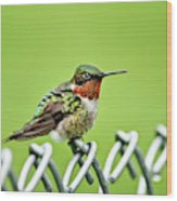 Hummingbird On A Fence Wood Print