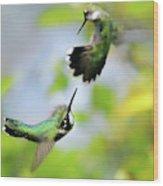 Hummingbirds Ensuing Battle Wood Print
