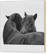 I Just Need A Hug. The Black Pony Bw Transparent Wood Print