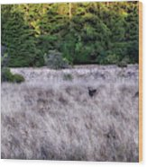 I Spy 4 Deer Wood Print