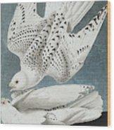 Iceland Falcon Or Jer Falcon By Audubon Wood Print