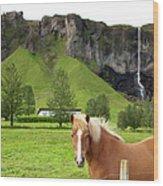 Icelandic Horse And Waterfall, Vik Wood Print