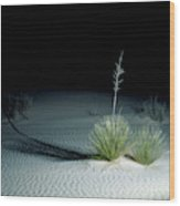 Illuminated Yucca At Night In White Sands National Monument, New Mexico - Newm500 00110 Wood Print