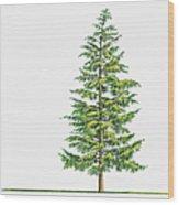 Illustration Of Large Evergreen Tsuga Wood Print
