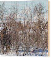 In Ninilchik A Moose Grazes In The Village In Late Winter Wood Print