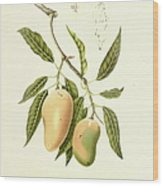 Indian Mango | Antique Plant Wood Print