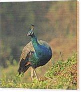 Indian Peafowl Wood Print